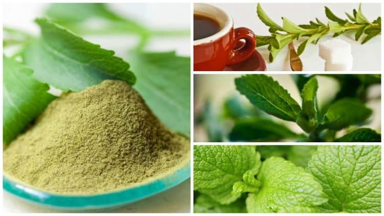 infusiones-stevia
