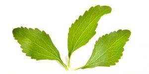 las hojas de stevia